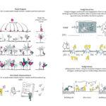 MAP, GELLERUP GROR LANDSCAPE AND URBAN REVITALIZATION, Ecosistema Urbano.